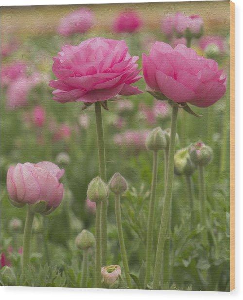Ranunculus Flowers Wood Print
