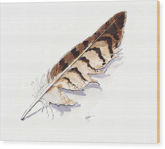 Raptor Feather Wood Print