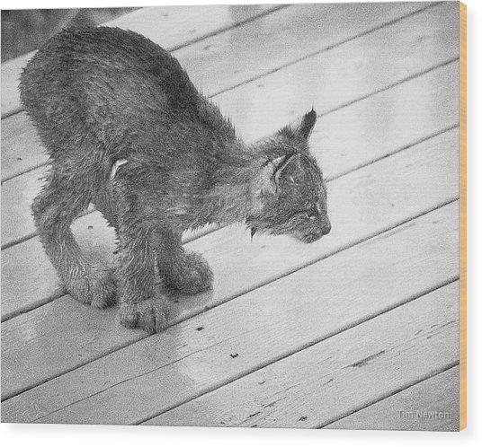 Crouching Kitty Wood Print