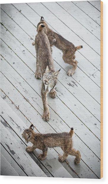 Always Scanning Wood Print