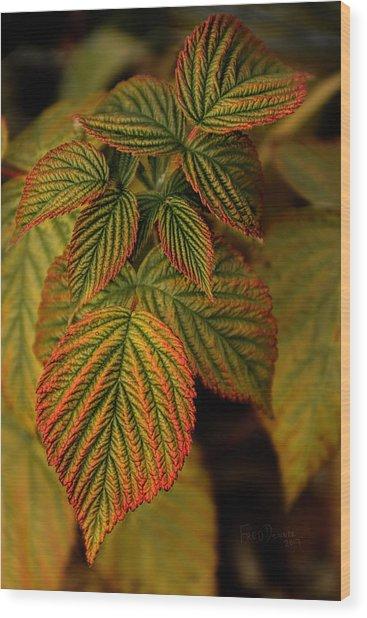 Raspberry Leaves Wood Print