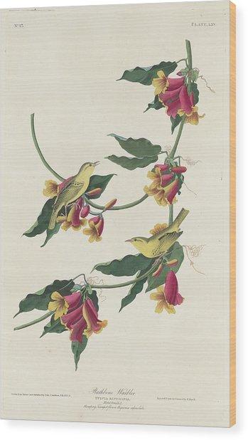 Rathbone Warbler Wood Print
