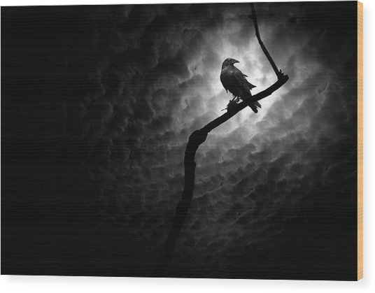 Raven, Death Valley Wood Print