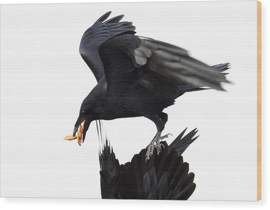 Wood Print featuring the photograph Ravens by Jane Melgaard
