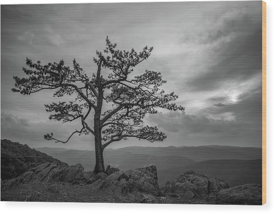 Raven's Roost Wood Print