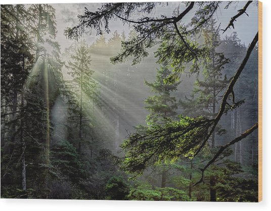 Rays Through An Oregon Rain Forest Wood Print