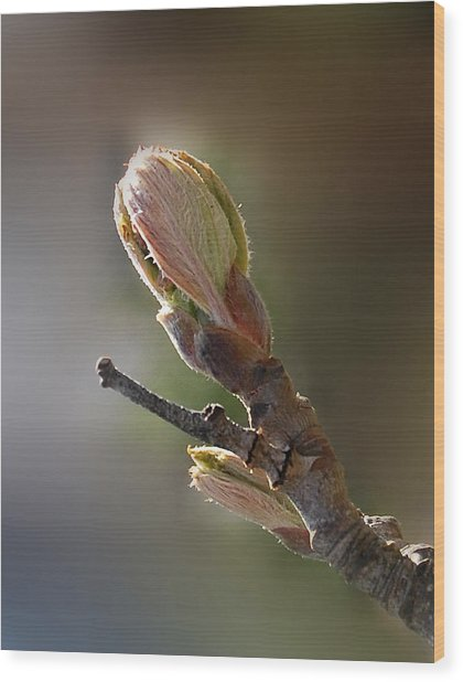Reaching For The Sun Wood Print by Marilynne Bull