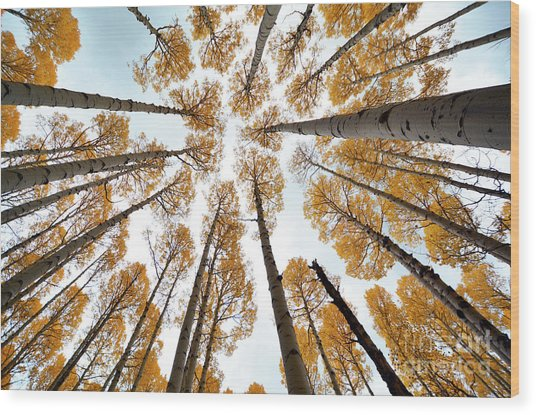 Reaching The Sky Wood Print