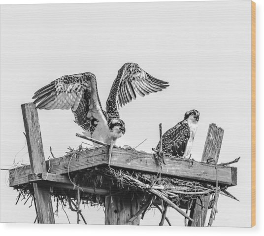 Ready To Fly Bw Wood Print