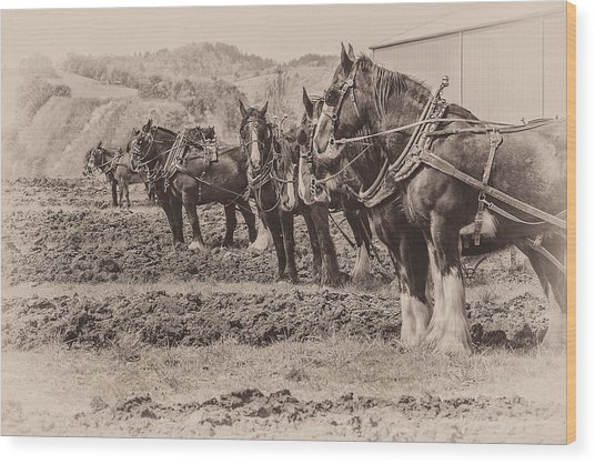Ready To Plow Wood Print by Joe Hudspeth