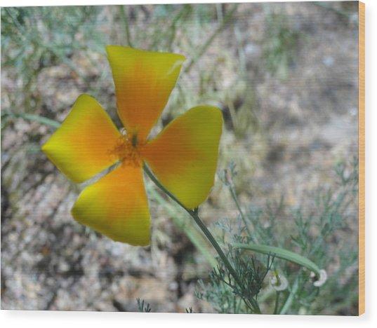 One Gold Flower Living Life In The Desert Wood Print