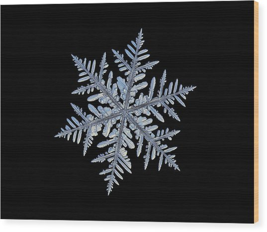 Real Snowflake - Silverware Black Wood Print