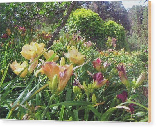 Really Big Bunch Of Lilies Wood Print by P Maure Bausch