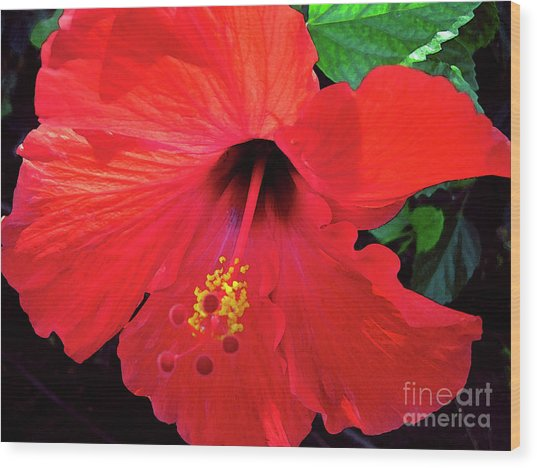 Reb Hibiscus Flower Wood Print