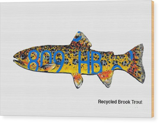 Recycled Brook Trout Wood Print