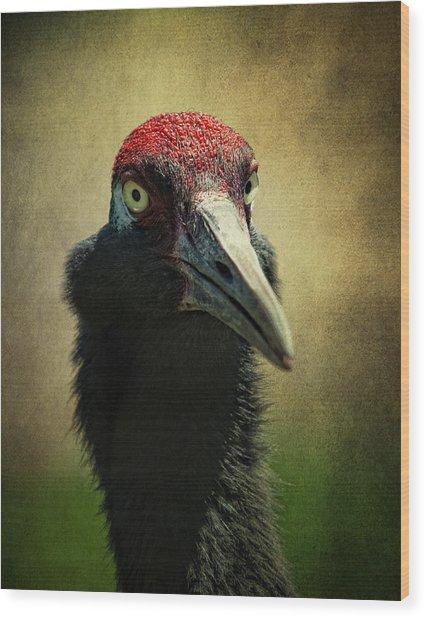 Red - Crowned Crane 1 Wood Print
