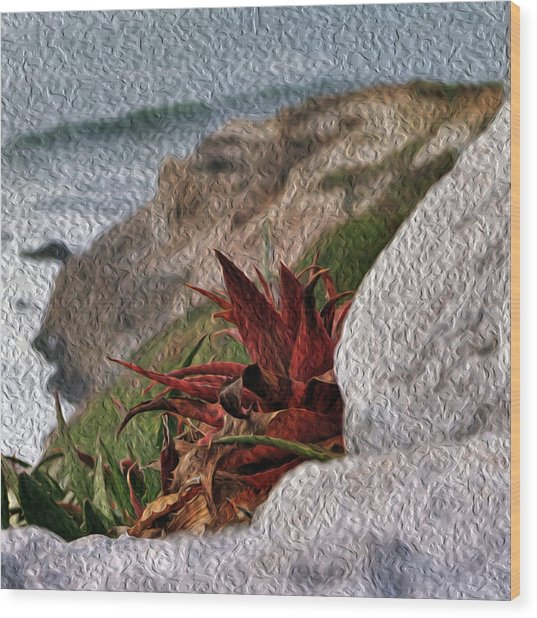 Red Aloe Vera By The Sea Wood Print