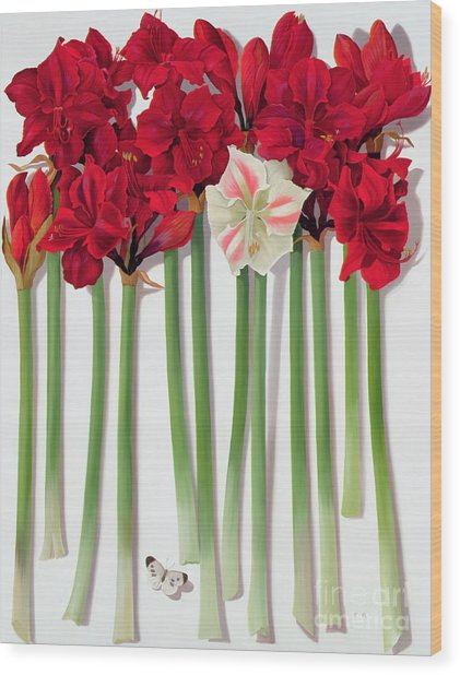Red Amaryllis With Butterfly Wood Print
