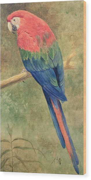 Red And Blue Macaw Wood Print