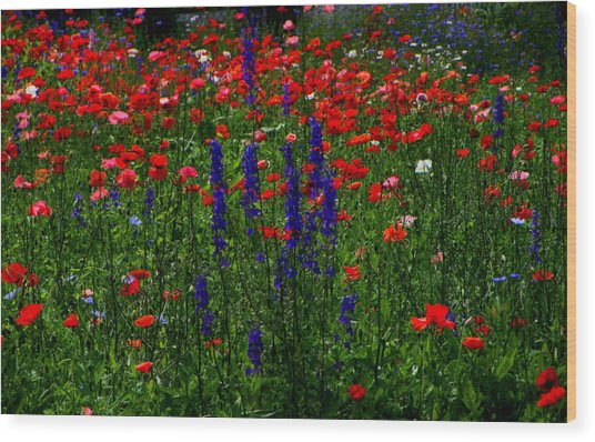 Red And Blue Wildflowers And Poppies Wood Print by Martin Morehead