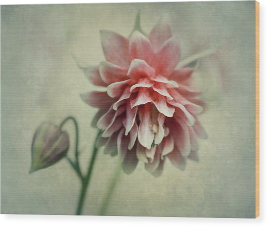 Red And Pink Columbine Wood Print