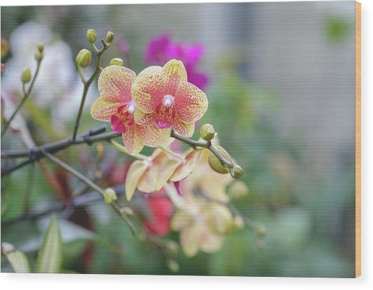 Red And Yellow Flower Wood Print