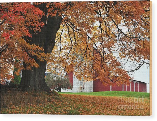 Red Barn In Autumn Wood Print