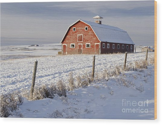 Red Barn In Winter Coat Wood Print