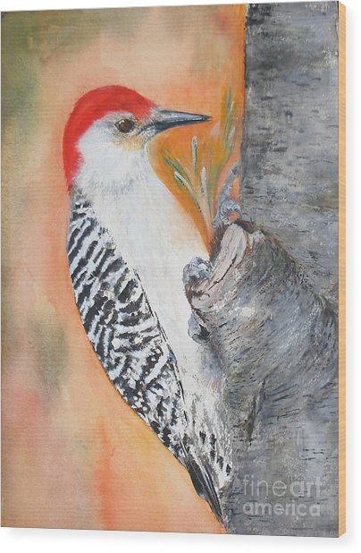 Red Bellied Male Woodpecker Wood Print