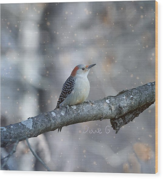 Red-bellied Woodpecker In Snow Wood Print