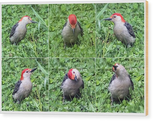Red-bellied Woodpecker Posing In The Grass Wood Print
