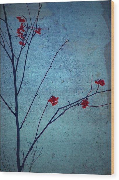 Red Berries Blue Sky Wood Print