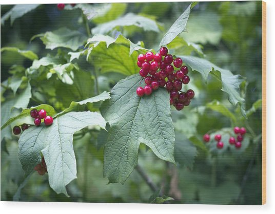 Wood Print featuring the photograph Red Berries by Helga Novelli
