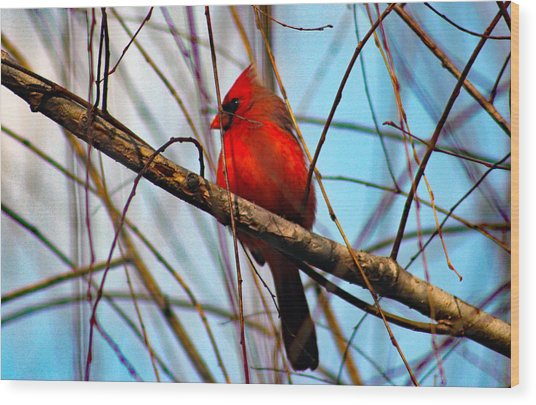 Red Bird Sitting Patiently Wood Print
