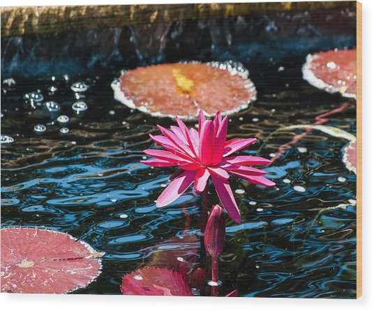 Red Blossom Water Lily Wood Print