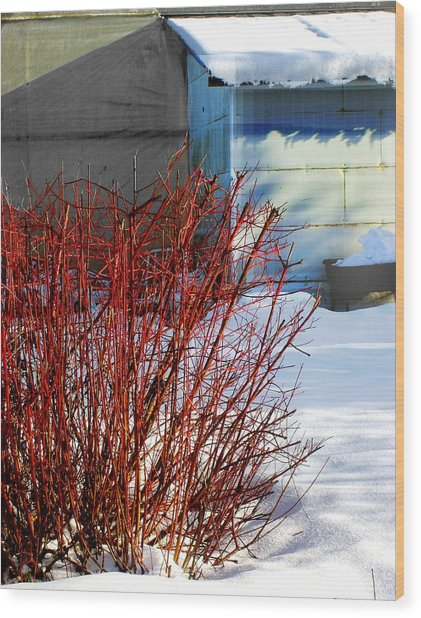Red Branches And Snow Wood Print by Barbara  White