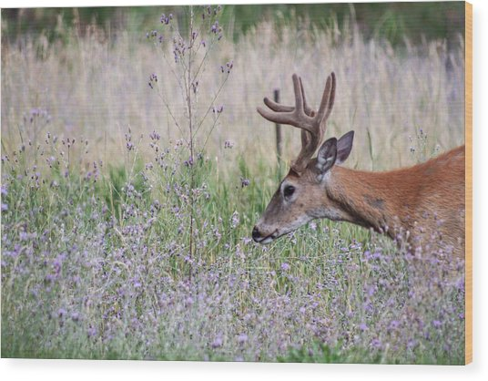 Wood Print featuring the photograph Red Bucks 4 by Antonio Romero