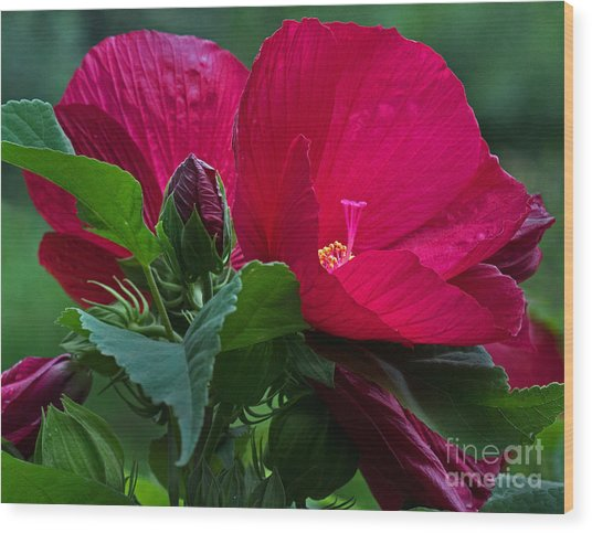 Red By The Pond Wood Print