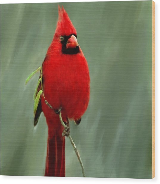 Red Cardinal Painting Wood Print