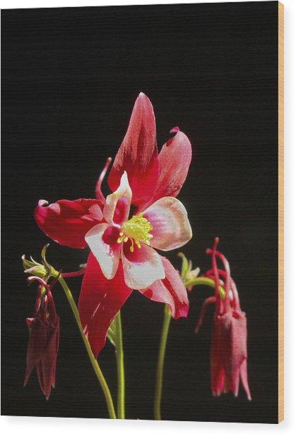 Red Columbine Flower Wood Print