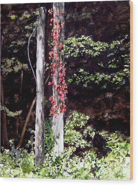 Red Creeper Wood Print by Carla Dabney