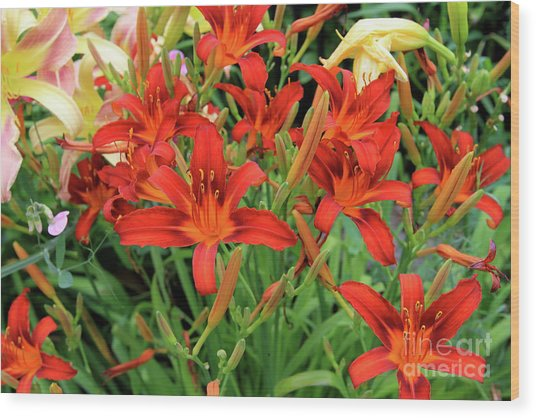 Red Daylilies Wood Print