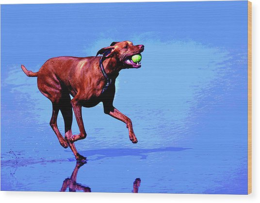 Red Dog Running Wood Print