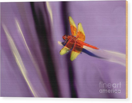 Red Dragonfly On Purple Background Wood Print