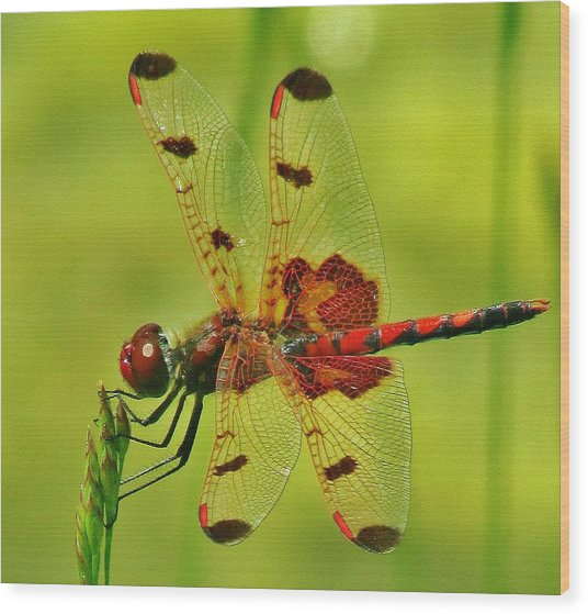 Red Dragonfly Wood Print by Thomas  McGuire