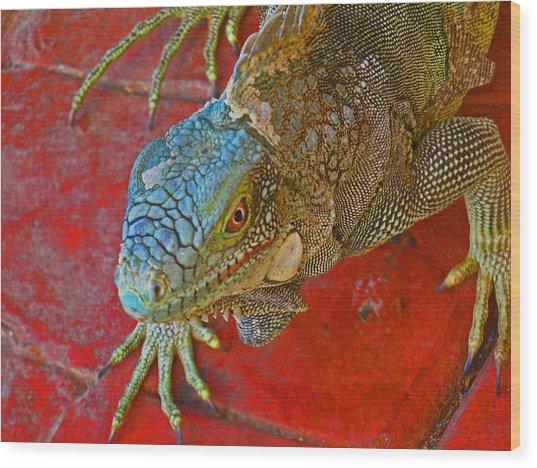 Red Eyed Iguana Photo Wood Print by Kelly     ZumBerge