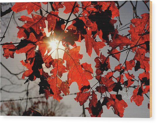 Red Fall Leaves Wood Print