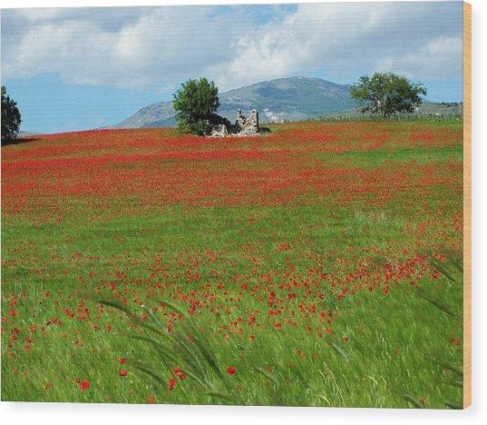 Red Fields Wood Print