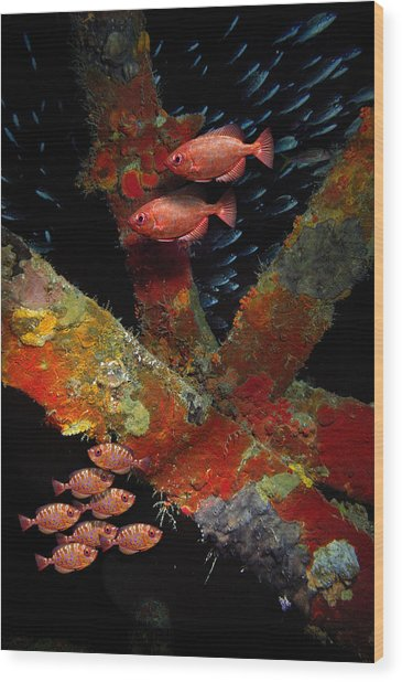 Red Fish On The Rhone Wood Print