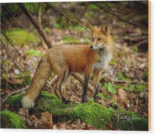 Red Fox #2 Wood Print